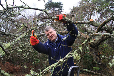 A picture of Councillor Woodward pruning an apple tree.