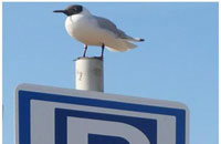 Seagull on information sign