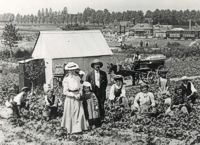 An image of strawberry pickers