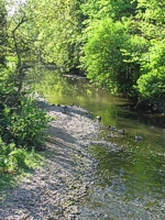 An image of the River Wallington