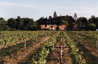 An image of the vineyard at Wickham