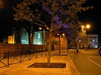 View of Harper Way at night showing newly planted uplit trees
