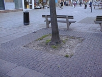 An image of a tree trunk in a square of earth surrounded by paving with a bench and a bin behind the tree and shop fronts in the background.